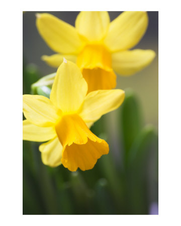 Narcisi, navijači i neke sitnice